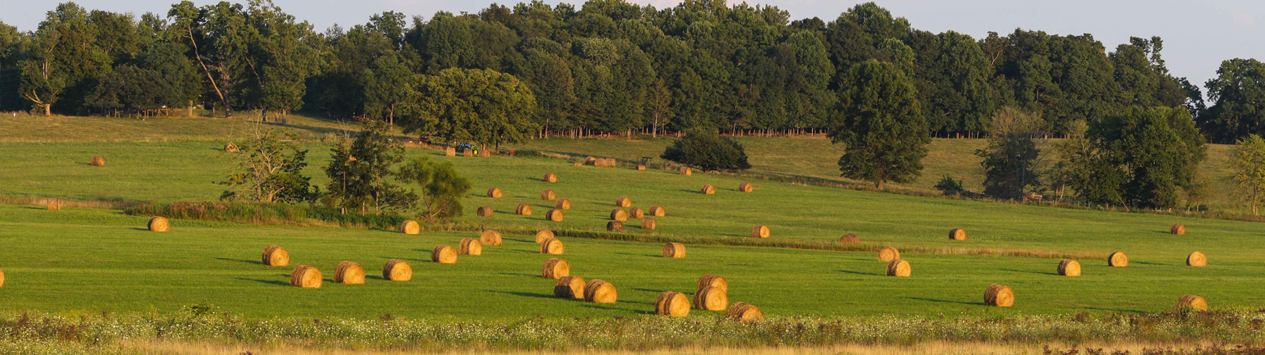 field dotted with bales of hay