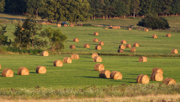 field with hay bales scattered across it